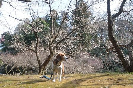 20150216佐倉城址公園20