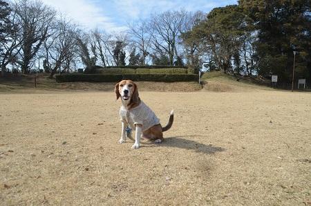 20150216佐倉城址公園26