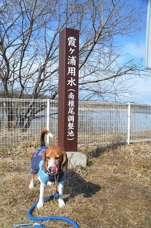 20150220つくし湖13