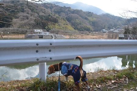 20150220つくし湖28