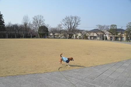 20150322ひたち野みずべ公園03