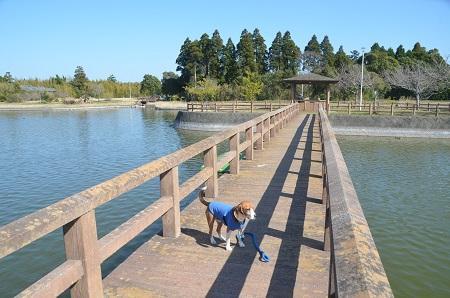20150326宮島池親水公園05