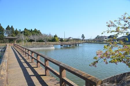 20150326宮島池親水公園04