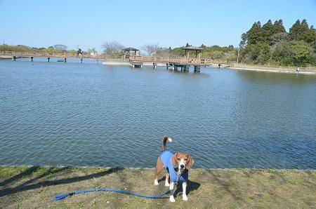 20150326宮島池親水公園10