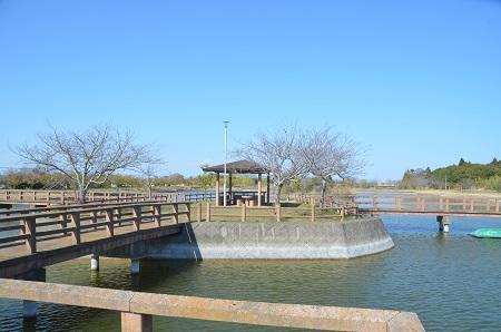 20150326宮島池親水公園08
