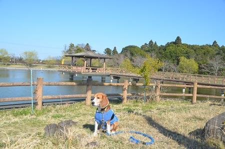 20150326宮島池親水公園17