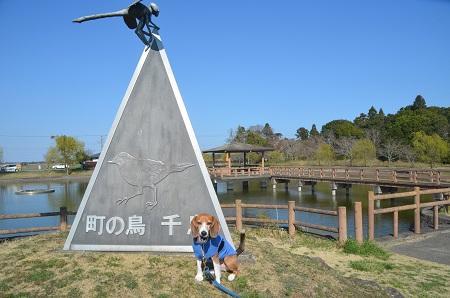 20150326宮島池親水公園15