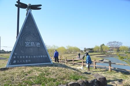 20150326宮島池親水公園74