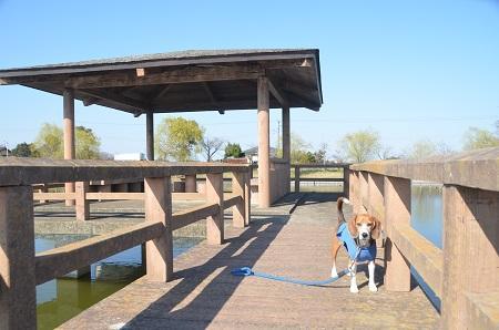 20150326宮島池親水公園22