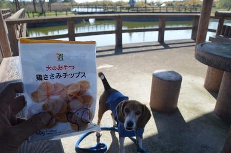 20150326宮島池親水公園19