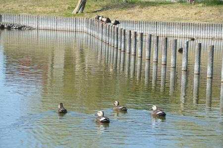 20150326宮島池親水公園25