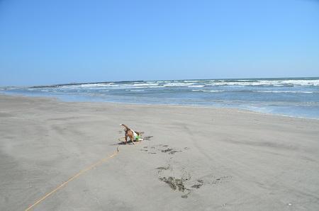 201450402片貝海岸16
