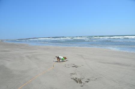 201450402片貝海岸15