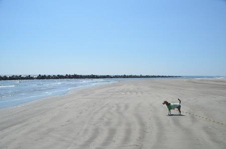 201450402片貝海岸32