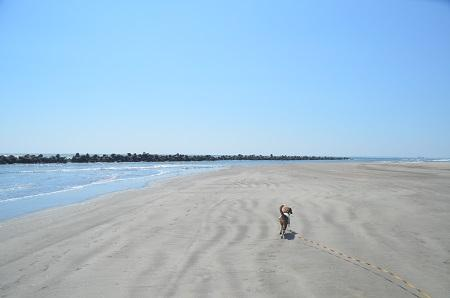 201450402片貝海岸31