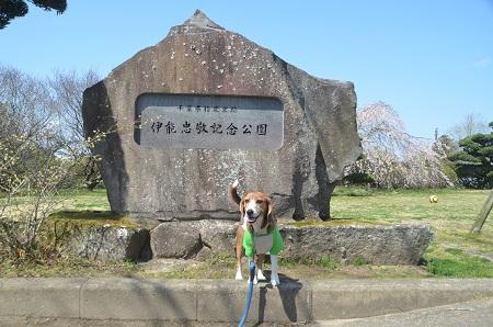 0150402伊能忠敬記念公園05