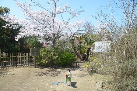 0150402伊能忠敬記念公園19