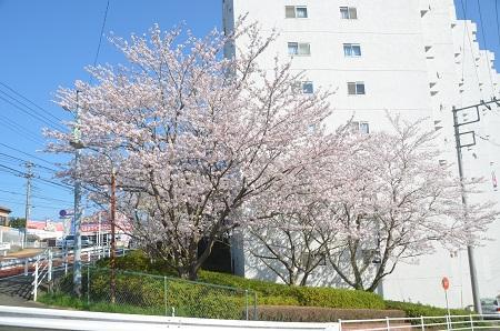 20150402佐倉城址公園01