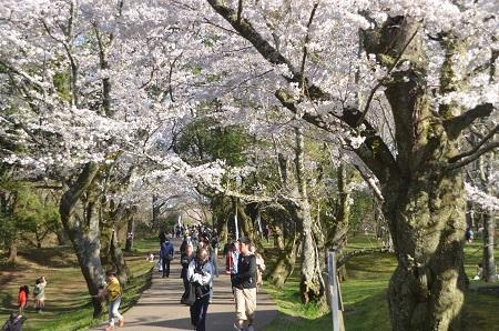20150402佐倉城址公園11