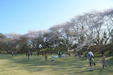 20150402佐倉城址公園14