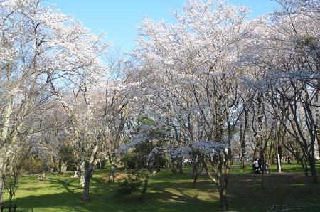 20150402佐倉城址公園23