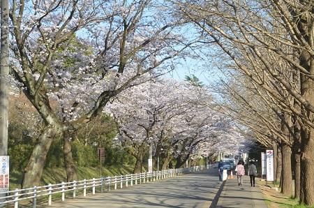 20150402佐倉城址公園26