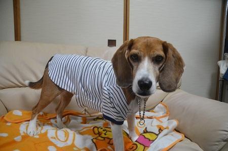 20150410犬服その508