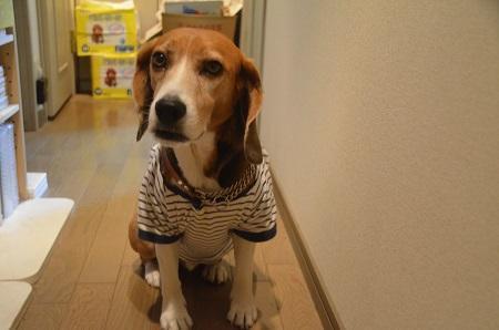20150410犬服その515