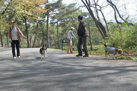 20140412国営武蔵丘陵森林公園07