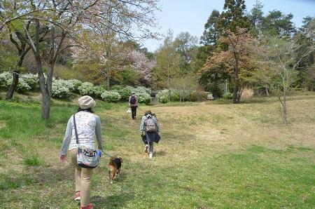 20140412国営武蔵丘陵森林公園13