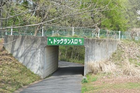 20150412森林公園ドッグラン02
