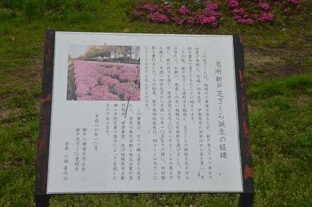 20150416相模原芝桜まつり06