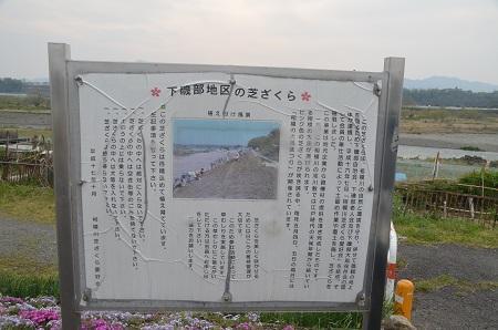 20150416相模原芝桜まつり07