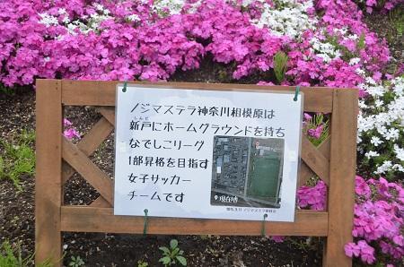 20150416相模原芝桜まつり25