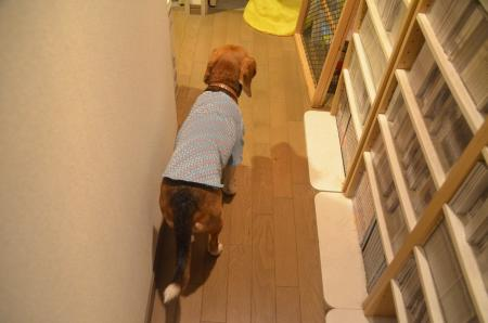 20150415犬服作り12