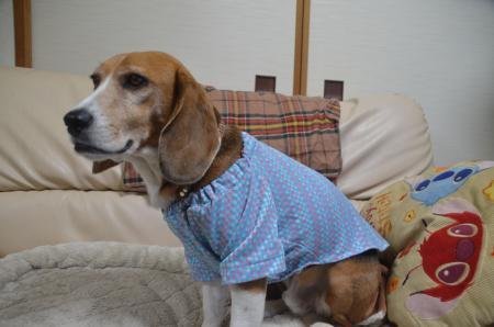 20150415犬服作り09