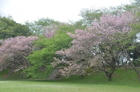 20150421佐倉城址公園21