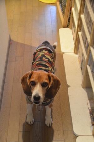 20150426犬服作り16