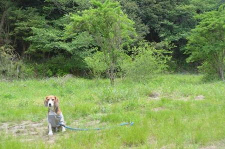 20150504鹿野山小学校10