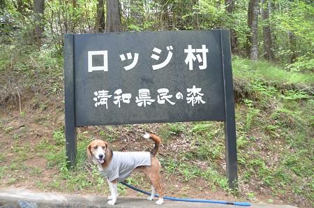 20150504豊英大滝03