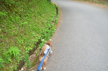 20150504豊英大滝21