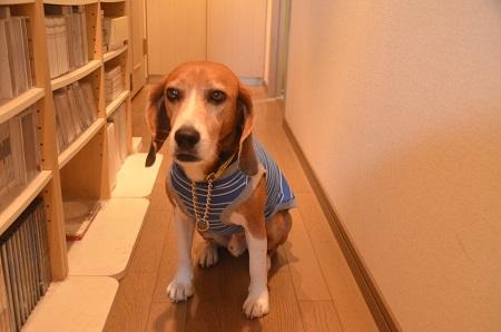 20150505犬服05