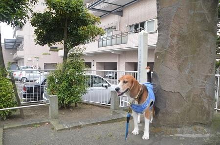20150509烏山藩厚木役所跡09