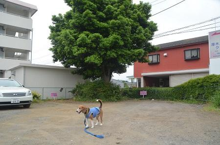 20150509荻野小学校下分校跡07