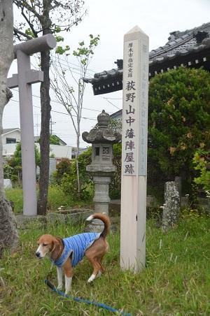 20150509荻野山中陣屋跡06