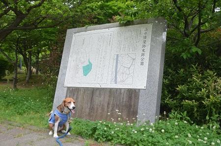 20150509荻野山中陣屋跡03