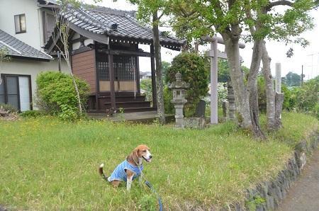 20150509荻野山中陣屋跡09