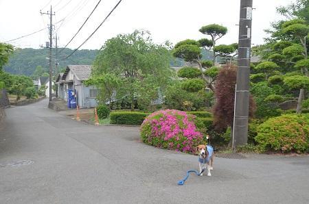 20150509荻野山中陣屋跡22