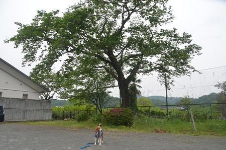 20150509荻野小学校上分校03
