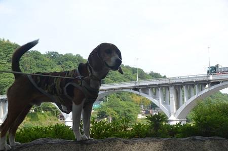 20150514相模湖八景 小倉橋10
